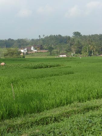 Balam Bali Villa: vue