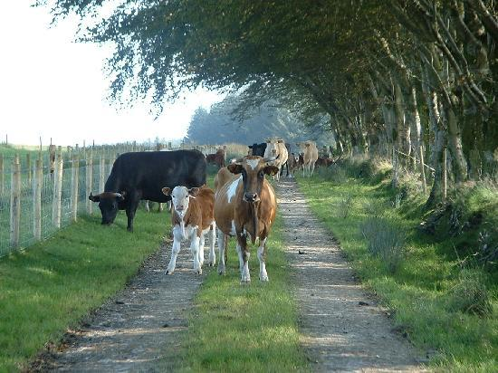 Pant-Teg B&B and Cottages: We met some of the neighbours!