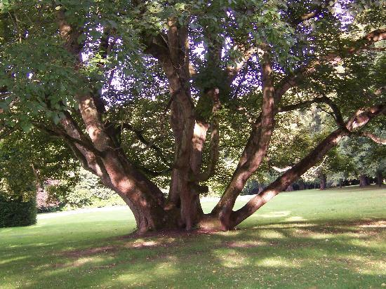 Redworth Hall Hotel: Beautiful old trees in the grounds