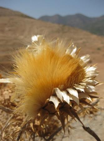 Berber Travel Adventures : beauty in the summer desert