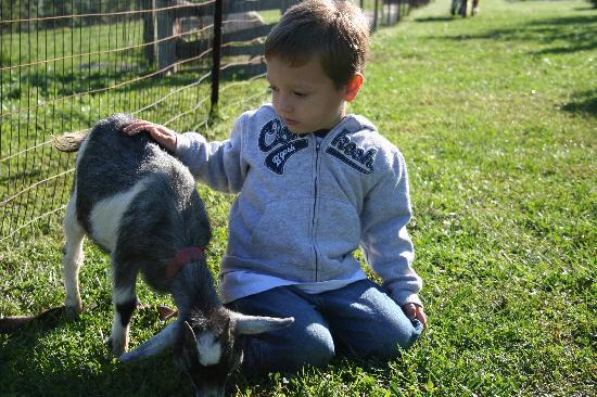 Hill Country Vista Bed & Breakfast: My son and a goat