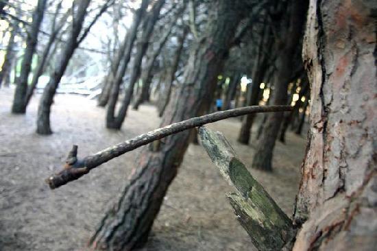 Miramar - Bosque o Centro Energetico