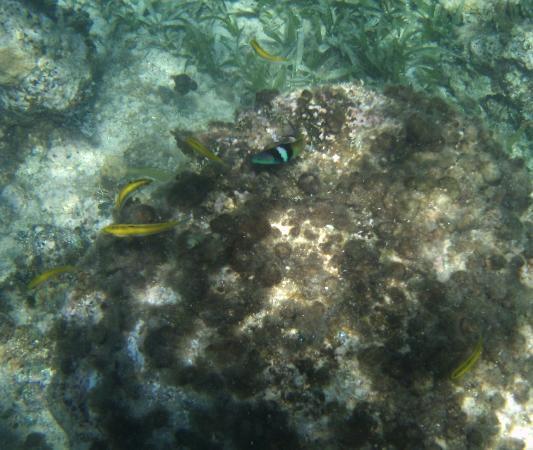 Moon San Villa: Fish on the Reef
