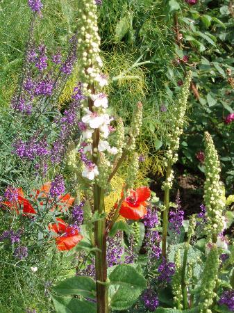 Sissinghurst Castle Garden : July flowers at Sissinghurst