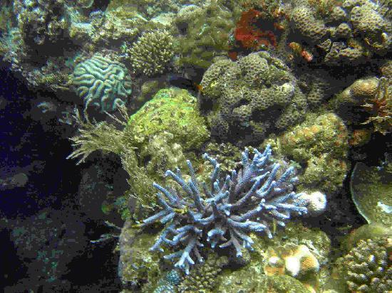 Poinciana Oceanside Resort & Retreat Centre: Korallenwelt