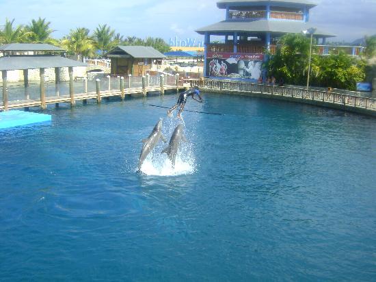 Grand Paradise Playa Dorada: Dolphins AMAZING