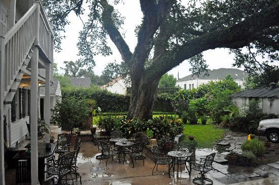 Ashton's Bed and Breakfast: Back yard with 200 year old oak tree.