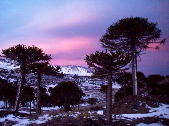 Provinz Neuquén, Argentinien: Atardecer con araucarias vista del Aguila