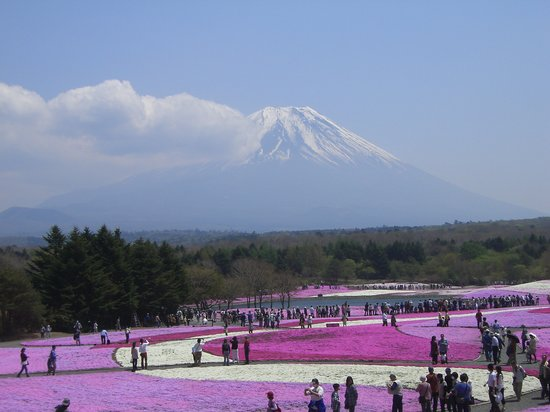Fujikawaguchiko-machi, Japan: 富士芝桜まつり