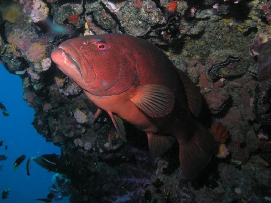 Alva Beach, Australien: Red Emperor