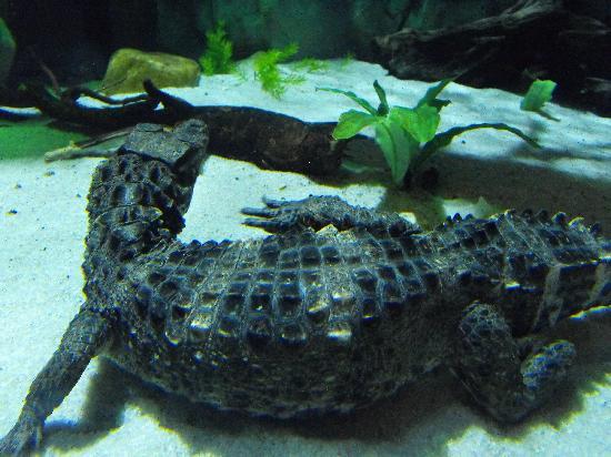 fun watching the animals. - Picture of Loveland Living Planet Aquarium ...