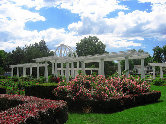 Lakeside Park & Rose Garden : Roses