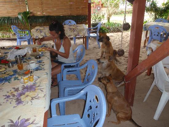 i cagnoloni di villa flamboyant in attesa di un po' di pane e marmellata