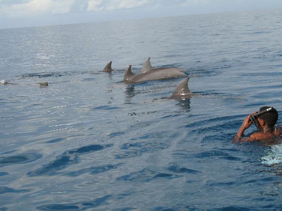 paje by night hotel bagno con i delfini