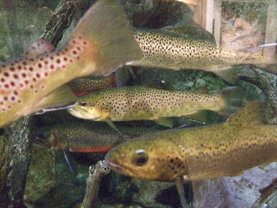 Harraseeket Inn: LL Bean fishtank