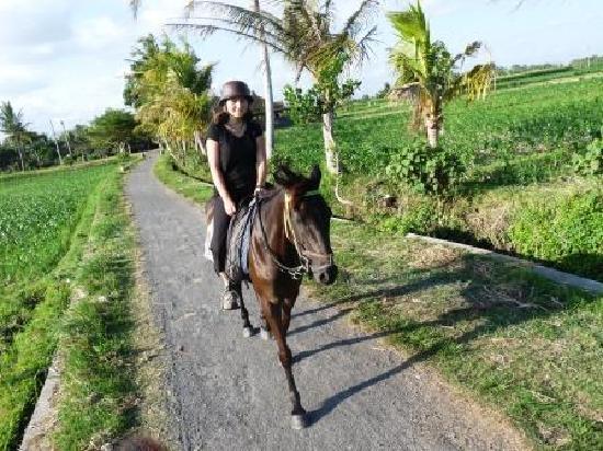 Bali Island Horse région de Tabanan