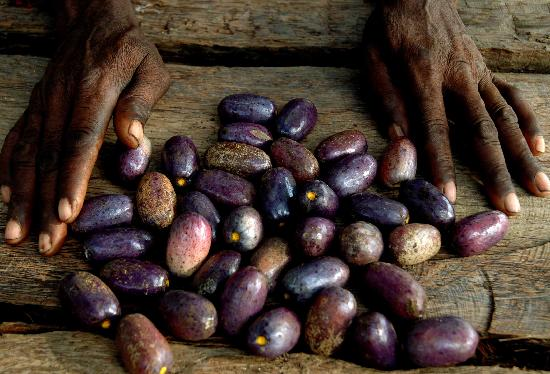 Santo Tomé y Príncipe: Sao Tome Cacao - Photo by Africa's Eden