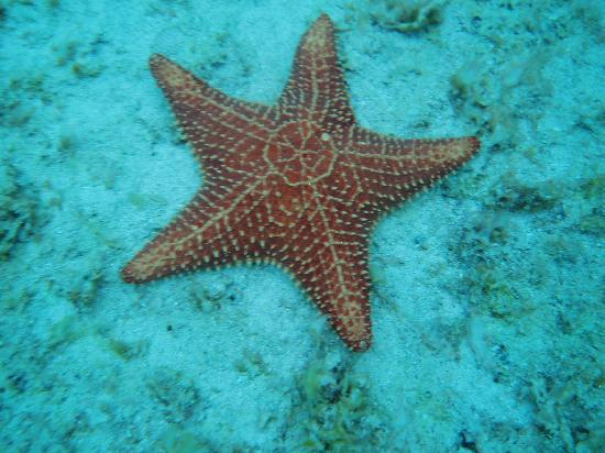 star fish picture of anchorage montego bay tripadvisor. Black Bedroom Furniture Sets. Home Design Ideas