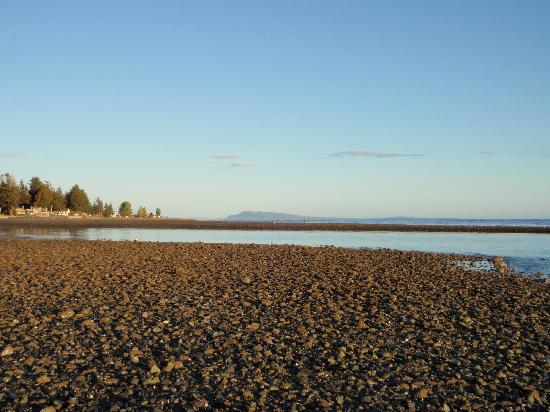 Qualicum Beach House: Pebbly and Rocky Beach
