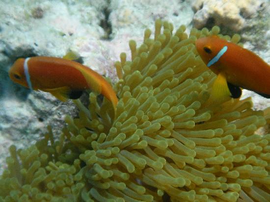 Embudu Village: Nemo
