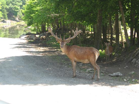 Montebello, Canadá: Such a beautiful creature