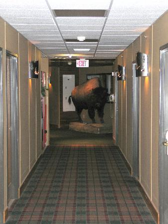 Lodge at Palmer Gulch: buffalo in the hallway outside of our room