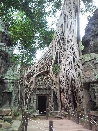 Siem Reap, Camboja: ankor