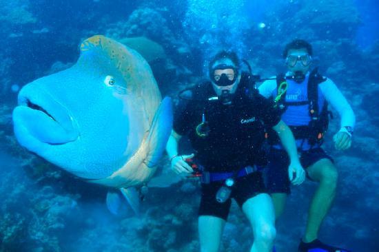 Port Douglas Scuba Diving Snorkeling