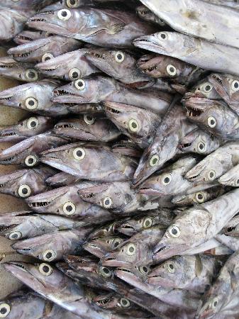 Nomad Guest House: Sardines, fish souq, Muscat