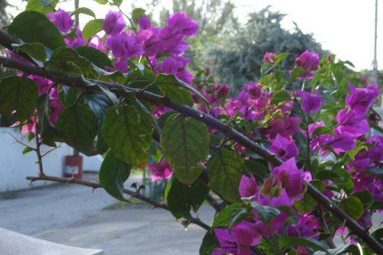 Bajan Breeze Guest House: flowers near by