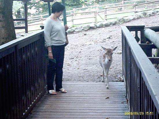 Lago Maggiore: Rispetto degli animali e della natura