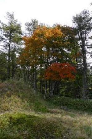 Okutama-machi, Japan: 頂上付近の紅葉
