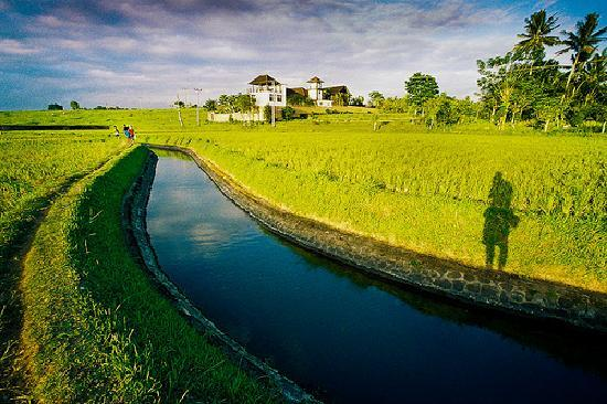 Balam Bali Villa: A walk around the rice padi fields just before sunset