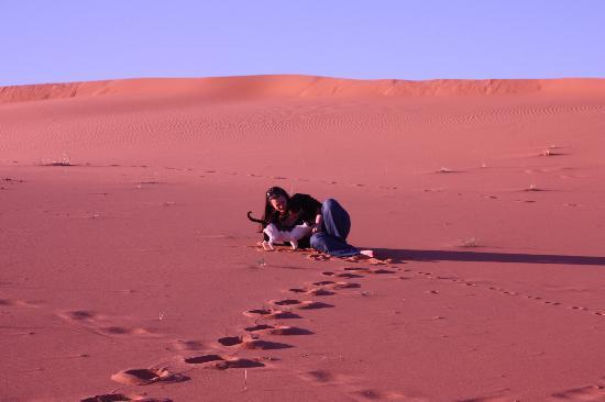 Merzouga Desert: The resident camp cat