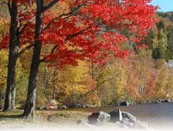 Foliage Vermont's Northeast Kingdom