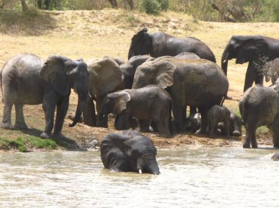 Национальный парк Ваза, Камерун: Parc de Kalawa au Cameroun