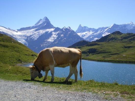 Grindelwald, Schweiz: first