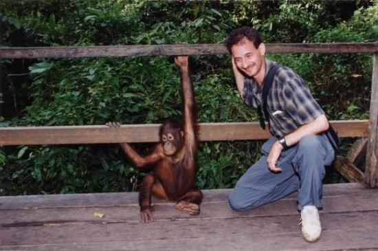 Sepilok Rehabilitation Center Sabah Borneo Orangutan | Holidays OO