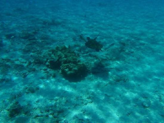 Similan Islands National Park Bungalows: Turtle
