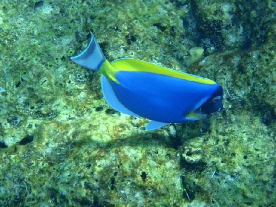Similan Islands National Park Bungalows: Fish