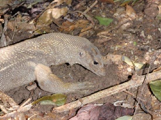 Similan Islands National Park Bungalows: Local