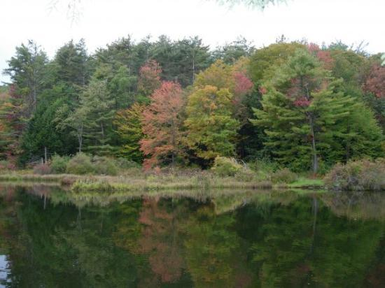 Guilford, VT: Sweet Pond Vermont State Park