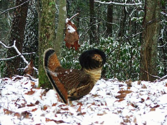 Fowel In Snow Picture Of Cades Cove Great Smoky Mountains National Park Tripadvisor