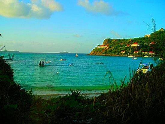 233 Tang De Saline Picture Of St Barthelemy Caribbean