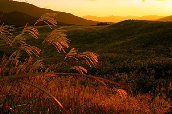 Sone Highland : 夕日に輝くススキ野原
