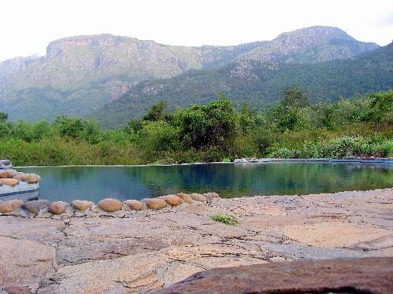 Jungle Retreat: Piscine