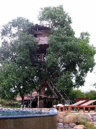 Jungle Retreat: Tree House