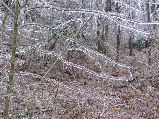 Ann Arbor, MI: Frozen Rainの後でできた「ガラスの森」