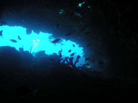 Cabrits Dive Centre: Swim Through at Five Fingers