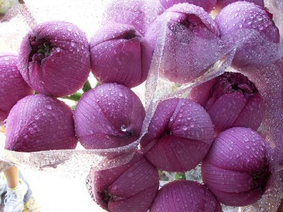 Hong Kong, Chine : marché aux fleurs.....